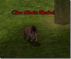 flamand2